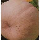 Dynia Olbrzymia Melonowa żółta (Cucurbita Maxima) nasiona