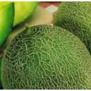Melon Seledyn nasiona