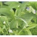 Stewia, Skupnia (Stevia) nasiona