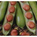 Bób Karmazyn (Vicia Fabia) nasiona