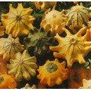 Dynia Ozdobna Korona Cierniowa (Cucurbita Pepo) nasiona