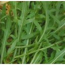 Rukola (Eruca Sativa) nasiona