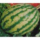 Arbuz Sugar Baby zielony (Citrullus Lanatus) nasiona