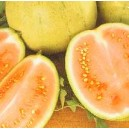 Arbuz, Kawon żółty (Citrullus Lanatus) nasiona