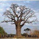 Baobab (Adansonia Digitata) nasiona